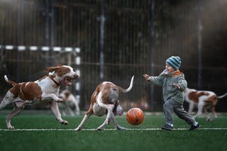 For Dog Lovers 3