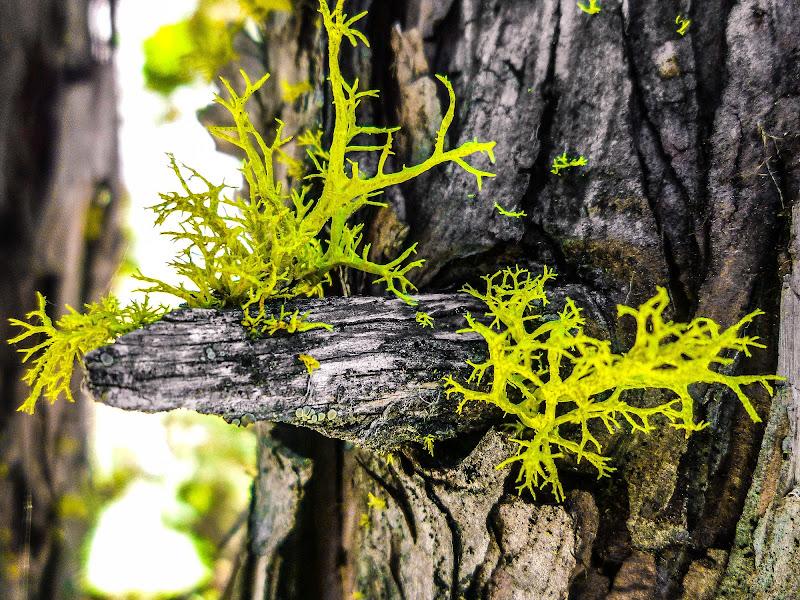Verdi coralli di framas03
