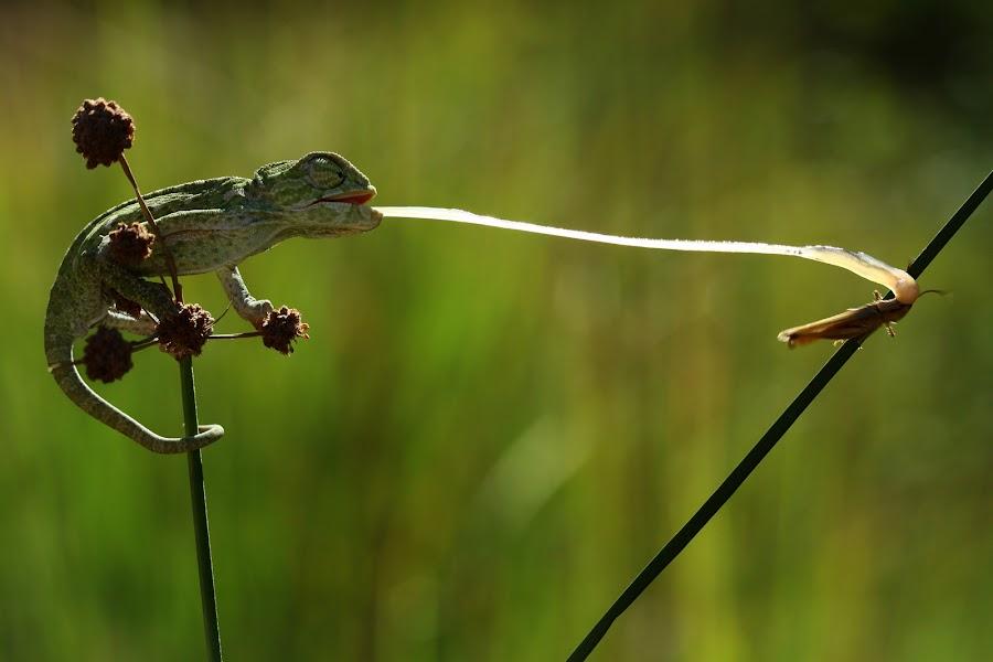 by Mehmet Karaca - Animals Reptiles