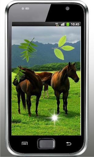 Horses Gallery 2015 LWP