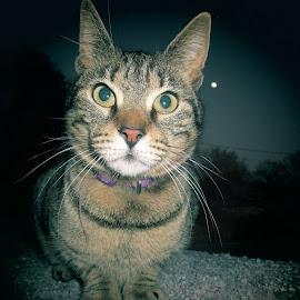 by Marijana Gašpić - Animals - Cats Portraits (  )