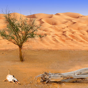 Stand Alone by Nazir Gohar - Landscapes Deserts ( skull, desert, sky, nature, tree, hdr, nikon d 90, beautiful, landscape, alone, photography, photoshop,  )