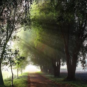 Misty morning 3 by Jiří Valíček - Uncategorized All Uncategorized ( mista, su, morning,  )