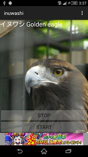 無料娱乐Appの鳥の鳴き声イヌワシ 記事Game