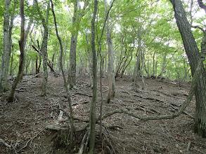 一帯は二次林