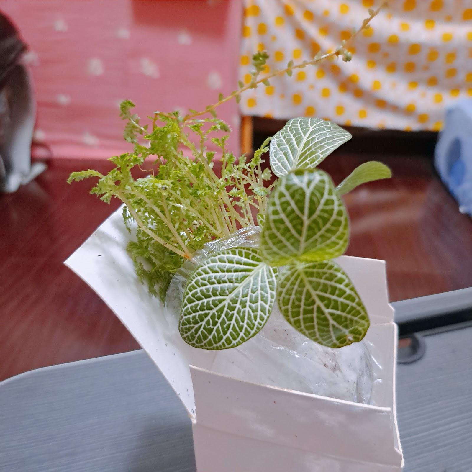 ▲生態瓶植物包▲
