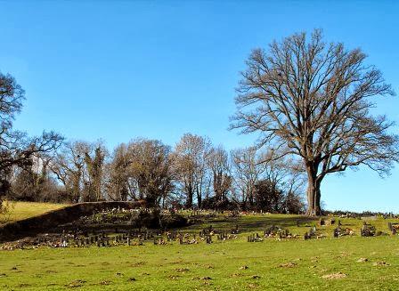 Anger over graveyard sheep