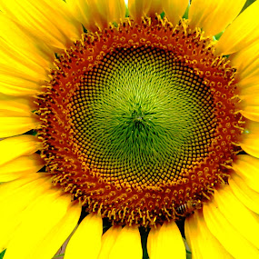 AWESOME   CREATION by Tina Banik - Flowers Single Flower (  )