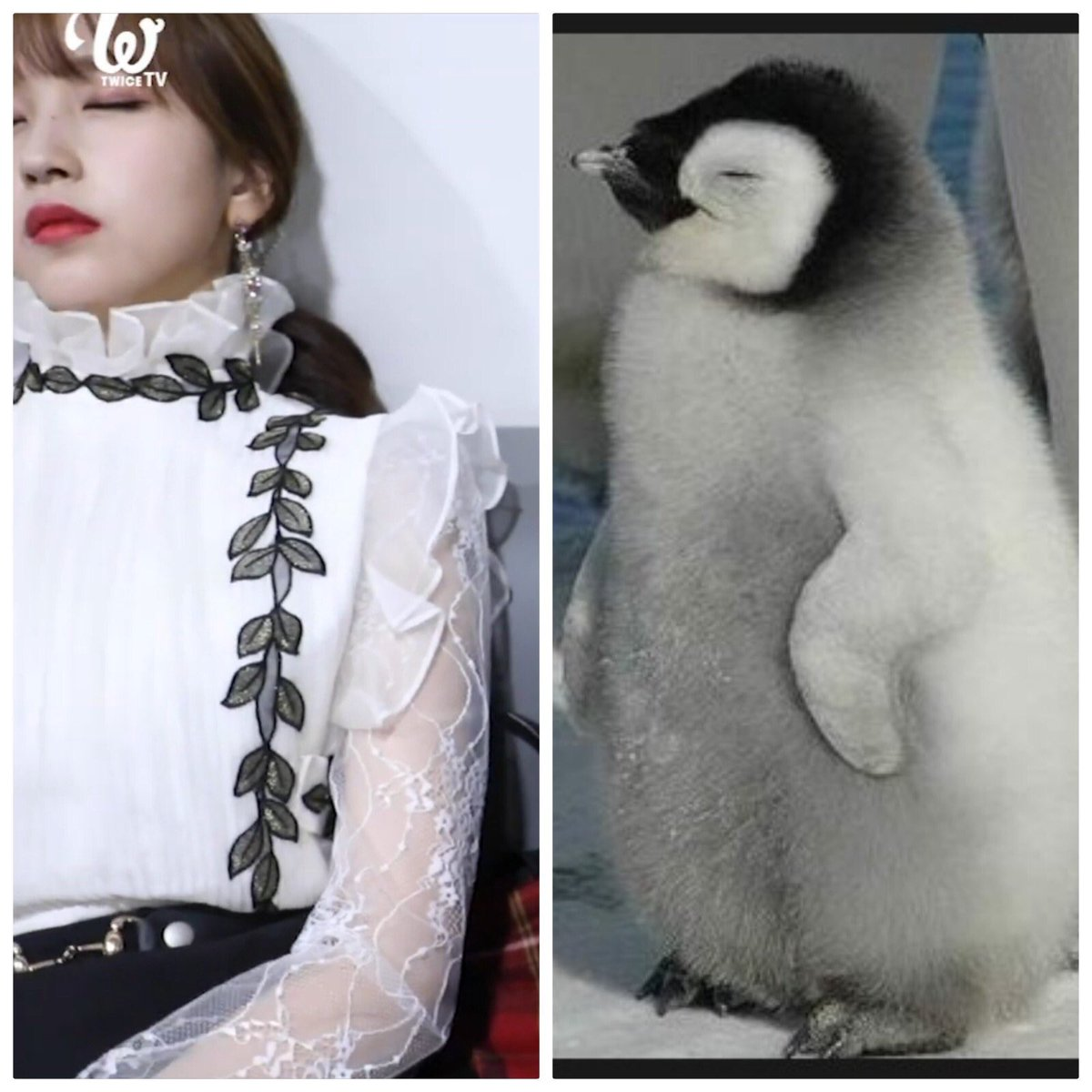 mina_penguin_3