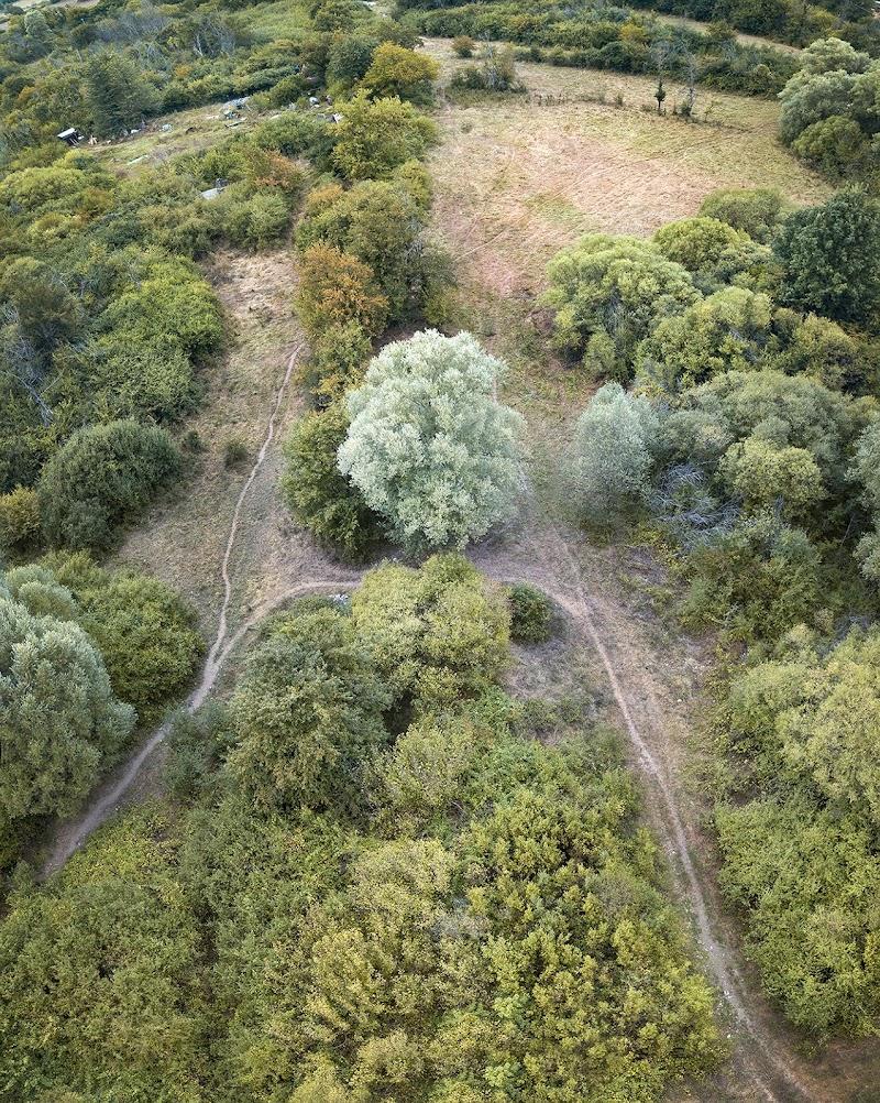 Special tree di Montevecchi