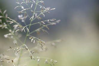 Photo: what? you all don't like weeds? :)
