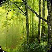 Forest Tile Puzzle