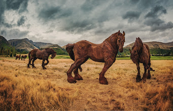 Photo: Horses against the Time  Remember that behind-the-scenes Android shot I posted yesterday while playing golf? Here's the final photo I got. I was excited and came home to process it!  This golf course (The Hills) is not only famous in New Zealand, but all around the world for having unique pieces of art like this throughout the links. They don't get in the way of the golf unless you just hit a horrible shot. But, take it from me, if you golf heads over into these tussocks, your ball is just gone forever... like dropping your car keys into flowing lava - they're just gone.