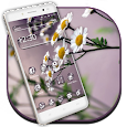 Summer Flower Life Launcher icon