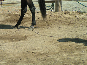 Photo: Remeber, the horse looks for the release as her reward!
