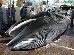 Image result for japan hunters