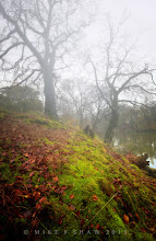 Photo: At The Edge Of The Witching Woods