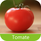 Plagues of Tomato