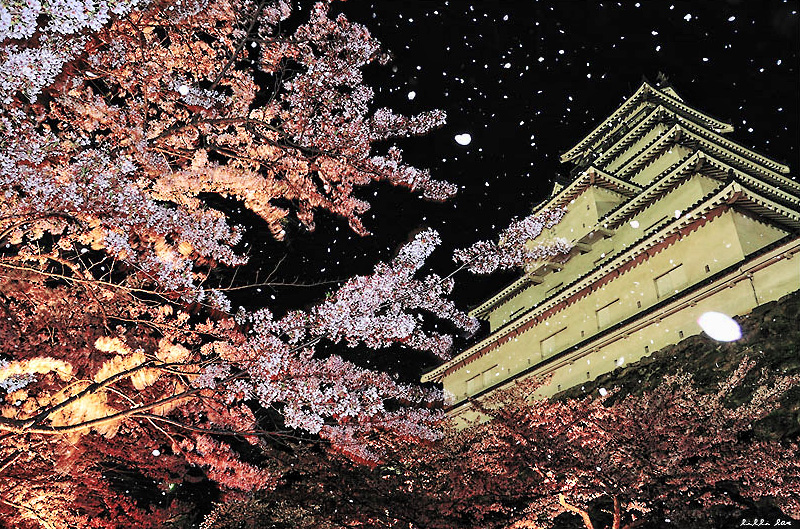 Photo: Each year in April, over 1000 sakura ( Cherry Blossoms ) bloom around Tsuruga Castle making it one of the most beautiful castles with sakura in Japan.