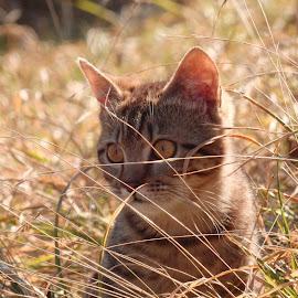 Mici by Valentina Masten - Animals - Cats Portraits