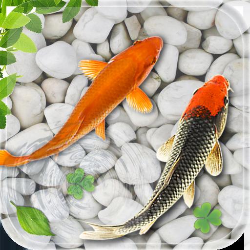 poisson vivre fond d'écran 2018 aquarium koi fond