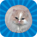 Jumping Cat - touch & tap