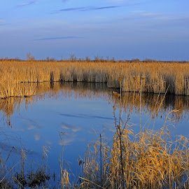 Tranquil Marsh by Bill Diller - Landscapes Waterscapes ( camlness, grasses, blue, michigan, nature, fish point wildlife refuge, tranquility, wildlife refuge, water, marsh, summer )