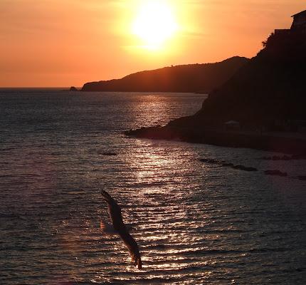 uccelli rientrano al tramonto di luciano55