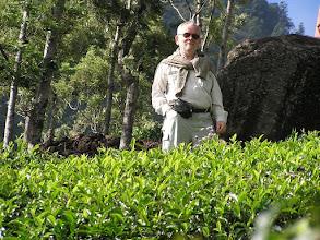 Photo: 7B220959 na plantacji herbaty
