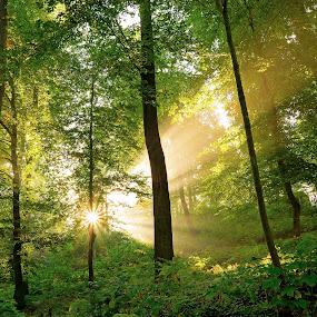 Sunlight by Jürgen Mayer - Landscapes Forests ( ray, nature, green, beams, forest, beam, sunlight, light, sun,  )