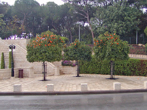 Photo: The gardens are in Haifa because the faith's founder spent 25 years imprisoned in a nearby town.  The tomb of the founder, Bab, is located here.