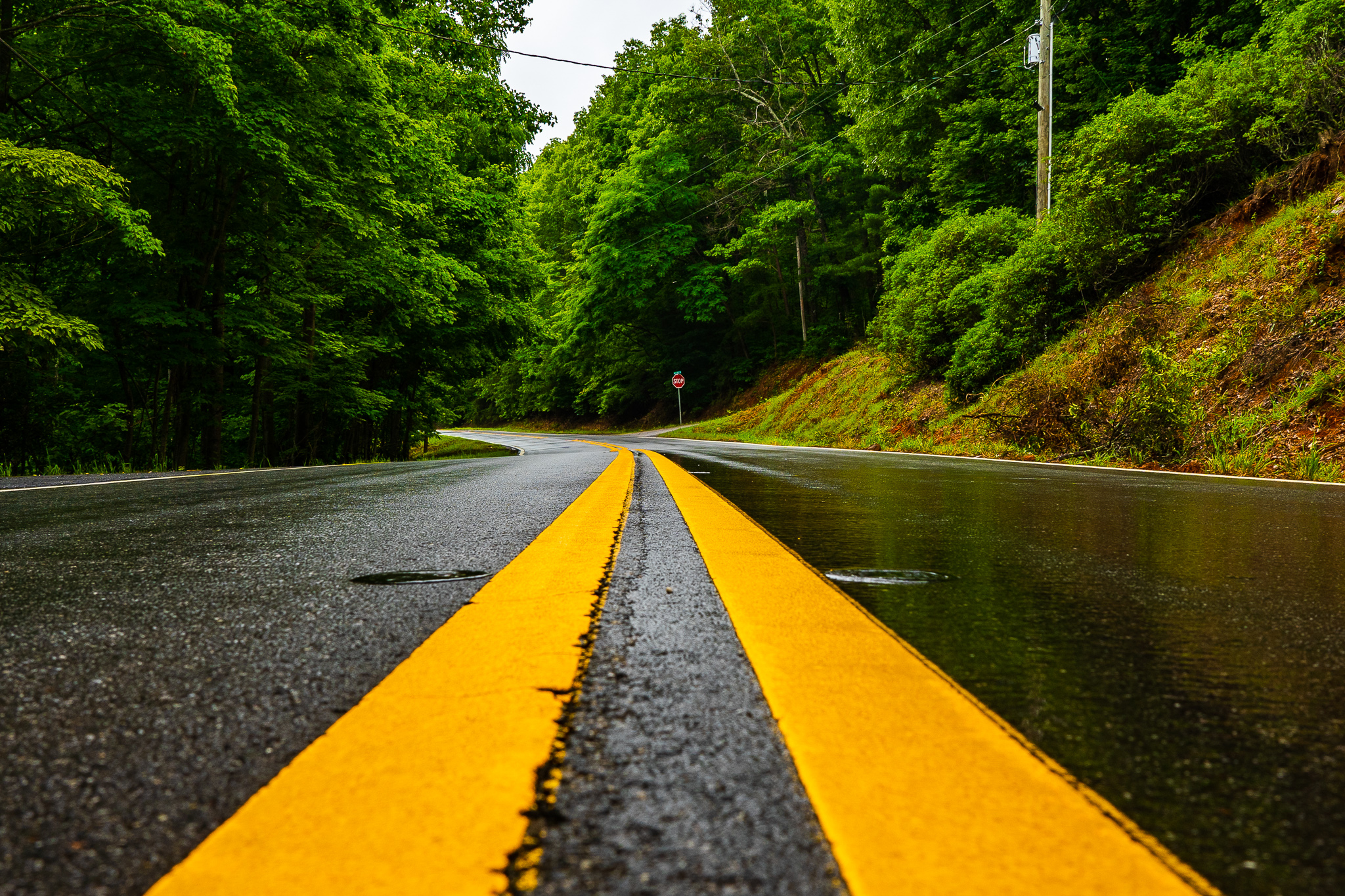 A winding road on a wet day in Georgia.