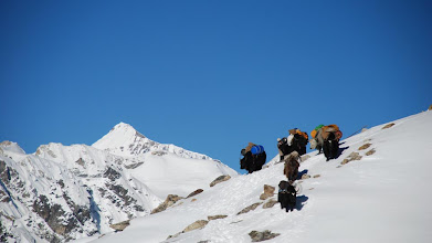 Photo: Kharta Valley, the yaks approaching the Lalung La