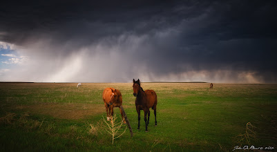 """Photo: """"Horses In the Storm"""" Photo thoughts---While storm chasing on the eastern plains of Colorado this past spring, we happened upon this scene. I imagine that these Horses are quite used to this sort of weather out here where the afternoons showcase some of the most violent weather on earth. It was pretty amazing really to see them all standing out here in ranch land backed up by a severe thunderstorm that was heading towards them. It certainly made for quite the dramatic scene and one needless to say I had to photograph. ---John http://www.jdebordphoto.com Fine art prints available of this photographhttp://www.redbubble.com/people/kkart/works/9239504-horses-in-the-storm  +Breakfast Art Club #breakfastartclub +Breakfast Club #breakfastclub +CloudPoker #cloudpoker +Weather and Natural Forces #weatherandnaturalforces  #plusphotoextract  #photoextractplus  #exposedphoto  #colorado"""