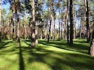 Чистый, но дикий лес