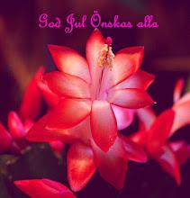 Photo: julkaktus  http://nfmacro.blogspot.com/