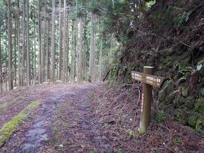 林道歩きに