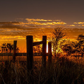 My corner of the world by Dan Bartlett - Landscapes Sunsets & Sunrises ( farm, wy, ranch, fence, tree, sunset, weed, wyo, wyoming, sunrise, golden,  )