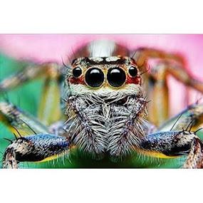 ===ANGGOTA GM===UPLOAD BERSAMA FOTO MAKROThema : wajah laba laba by Sengkiu Pasaribu - Instagram & Mobile Android ( gm_61, galeri_makro )
