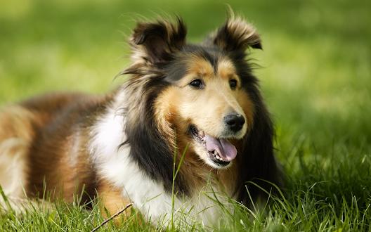 Fondos de Animales PRO Gratis
