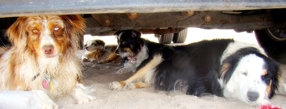 Photo: Ty, Corky, Jenny and Cowgirl chillin under the truck at the lake. Nap time!