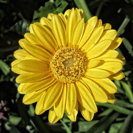 OLI flower 22 by Michael Moore - Flowers Single Flower (  )
