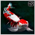 Koi Fish Wallpaper HD icon