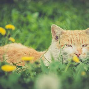 by Robin Alin - Animals - Cats Portraits (  )