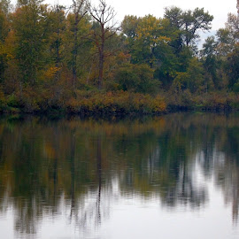REFLECT FALL by Cynthia Dodd - Novices Only Landscapes ( outdoors, fall, nature, reflections, river, water, trees, colors,  )