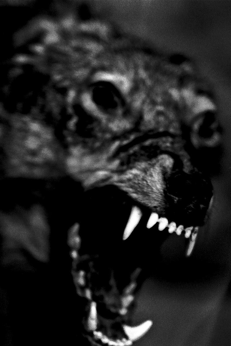 In bocca al lupo...Crepi!!! di Scaletta