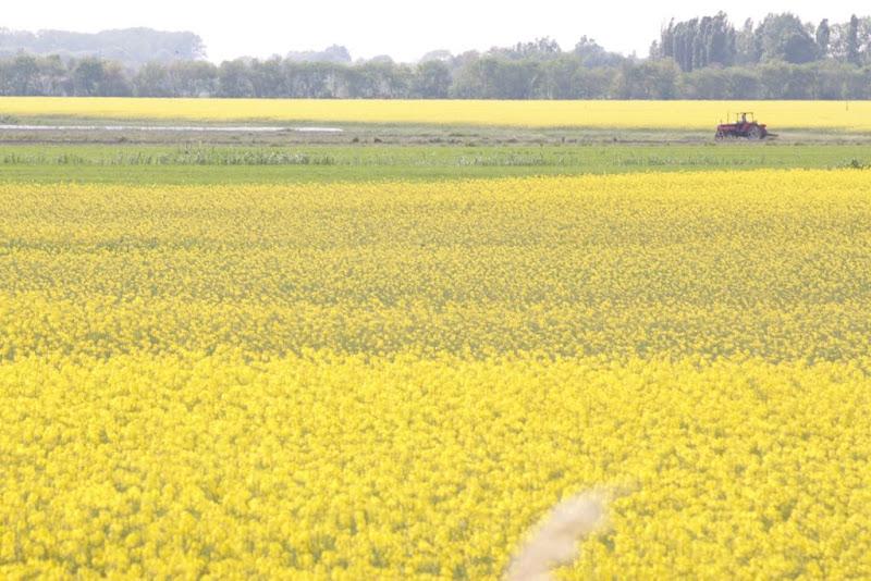 Mare giallo di Lucacase77