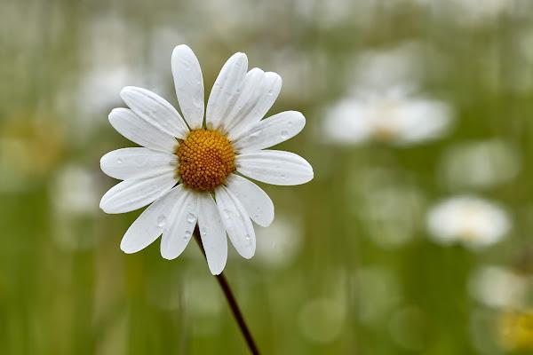 Fiore dopo fiore