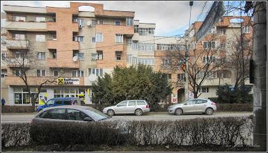 Photo: Tisă (Taxus Baccata) - de pe Str. Libertatii - 2017.02.24