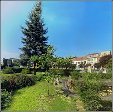 Photo: Arborele pagodelor (Ginkgo biloba) - din Turda, Piata 1 Decembrie 1918, spatiu verde - 2018.05.24
